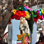 monkeys are a frequent sight at hampi