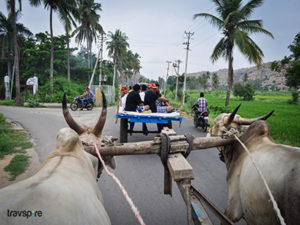 bullock cart rides present a scenic view of the landscape