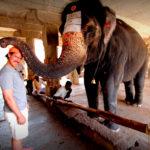 elephant blessing a patron